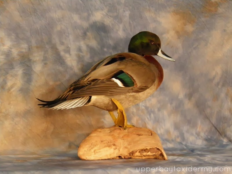 Pintail Table Mounts