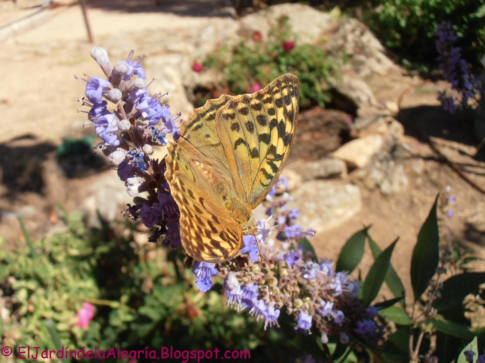 El jard n de la alegr a flores en septiembre for Cancion el jardin de la alegria