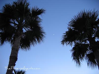 moon in between palm trees in peoria az