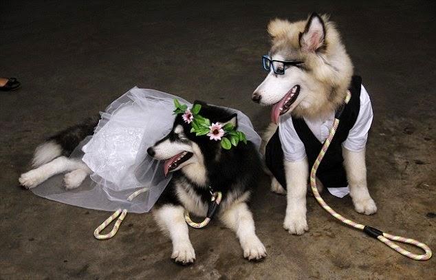 Lễ cưới của cặp đôi alaska Yipa và Buls diễn ra trong ngày hôm qua (8/2).
