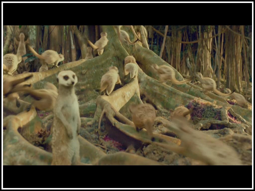 Cinemelodic cr tica la vida de pi 2012 ltima parte for Life of pi characters animals