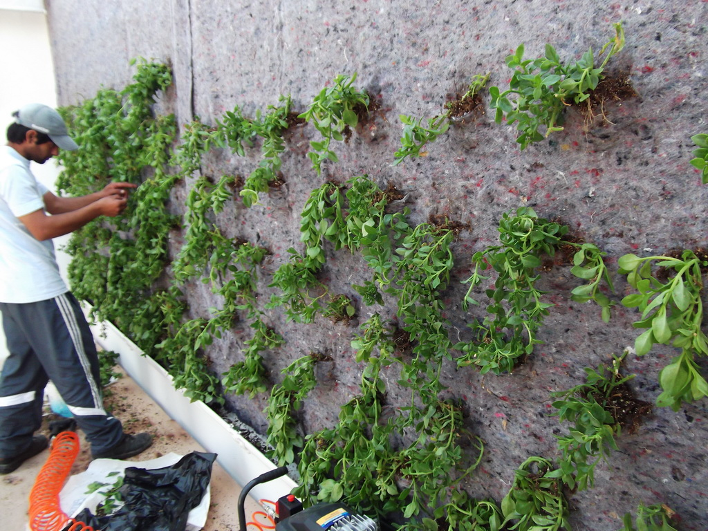 jardin vertical en argentina primer jardin vertical gwall