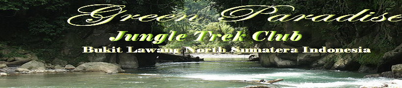 Green Paradise Bukit Lawang l Tour & Travel l Best Offer Adventure Club