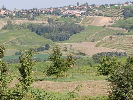 Ziano Piacentino