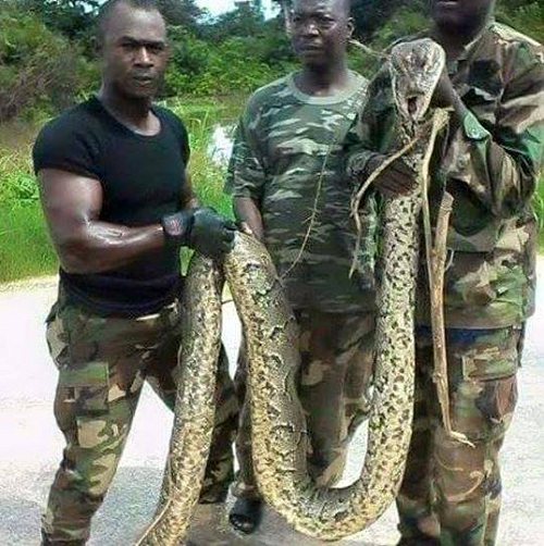 snake boko haram troops