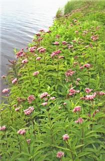 Lake edge blooms