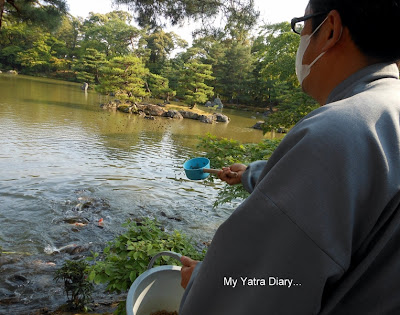 A man feeding fish in the Kinkaku-ji or the Golden pavillion, Kyoto in Japan