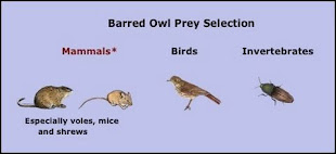 What do Barred Owls Eat