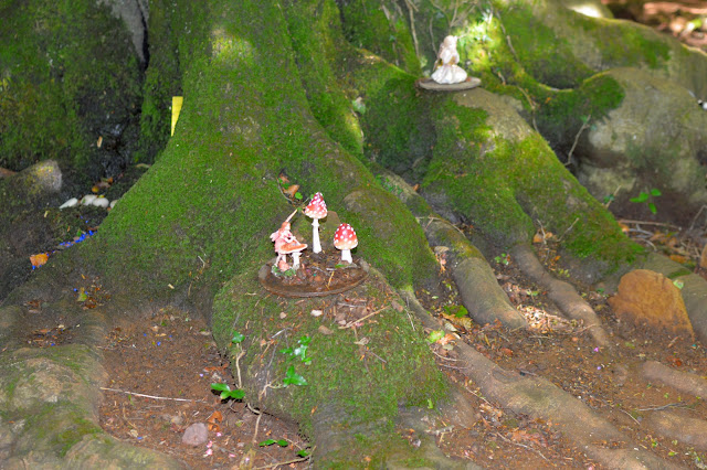 Fairy Toadstools on tree