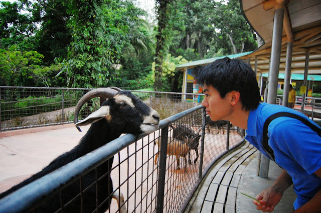 Singapore zoological gardens feeding