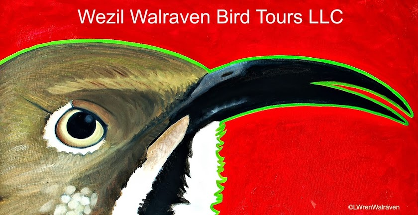 Wezil Walraven Bird Tours