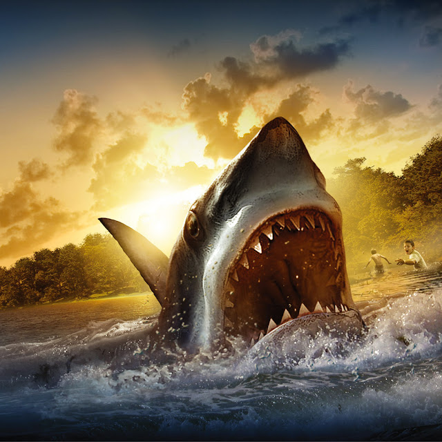 Shark attack wallpapers HD free download
