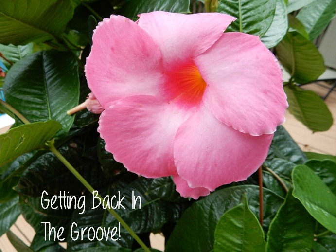 how to get back into the groove