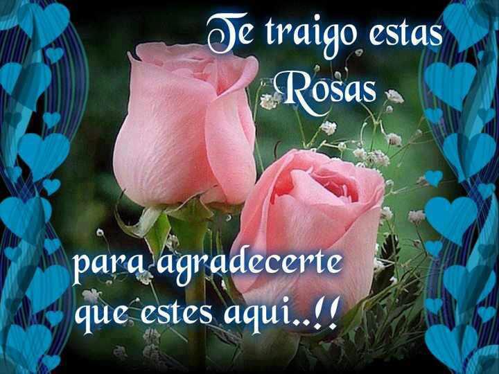 Rosas para ti amigo