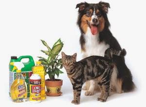 veterinaria online elementos caseros perjudiciales para gatos