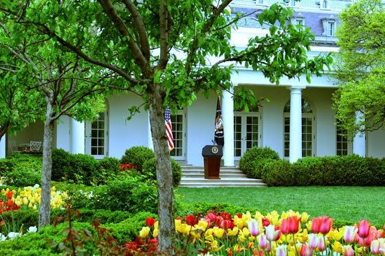 View of the Rose Garden during the White House Spring Garden open house