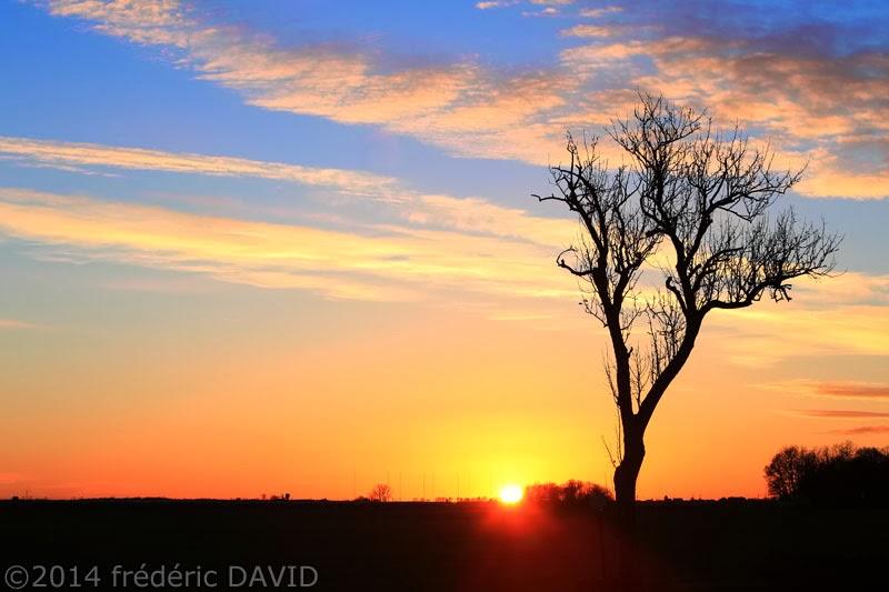 ciel soleil soir silhouettes arbres Seine-et-Marne