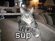 Funny Cat .