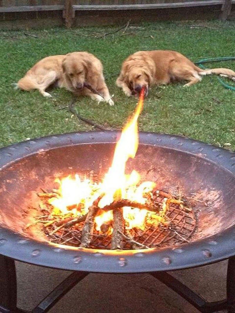 30 Pictures Taken At The Right Moment - The only golden retriever ever raised by dragons…