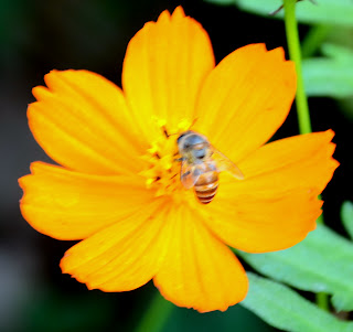 beautiful flower with honey bee
