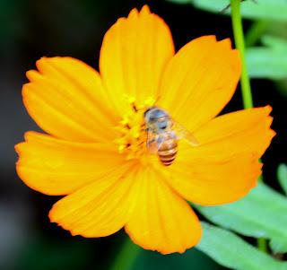 beautiful flower with honey bee