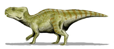 Auroraceratops