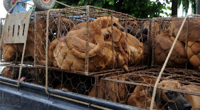 Ativistas protestam contra consumo de carne de cachorro