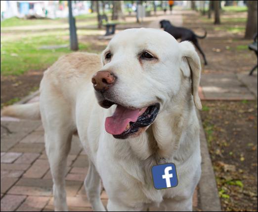 Perro Labrador Facebook