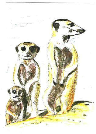 Three Meercats pic