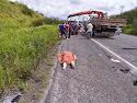 Acidente na BR-101 em Coração de Maria provoca uma morte e vários feridos