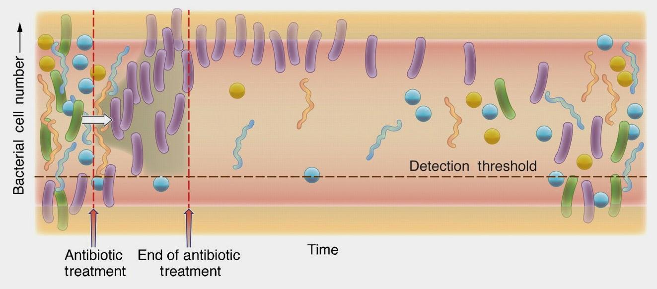 Efectos de los antibióticos en la flora intestinal