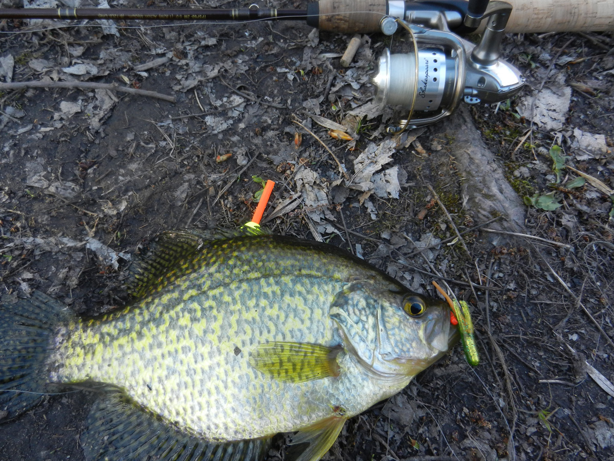 Fishing hunting in oswego county ny bullheads and for How to fish for crappie from the bank
