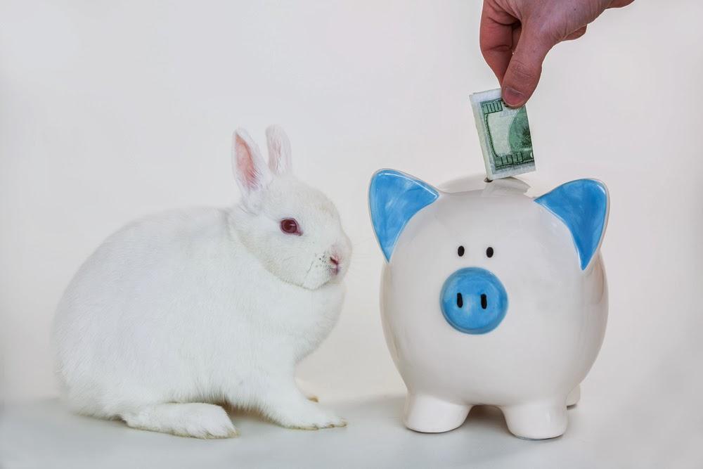 Yorkshire Blog, Mummy Blogging, Parent Blog, Pet, Dog, Dog Food, Pet Insurance, Vet, Animal Shelter,