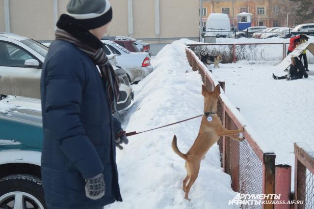 Собака у детской площадки
