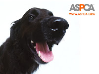 Here's Your Chance To Help The ASPCA