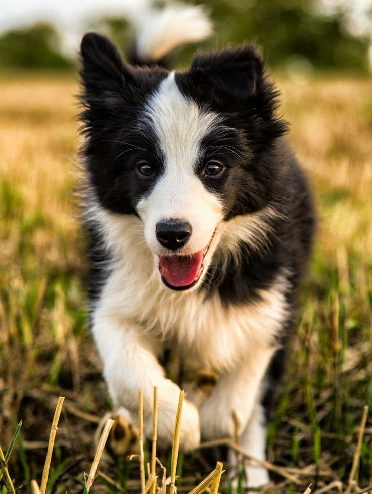 Top 5 Amazing Cute Dogs