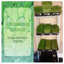 Cultivo de Microvegetais em Pequenos Espaços
