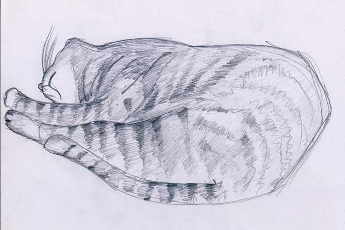 drawing cats drawing is easy and the following picture cat skesa