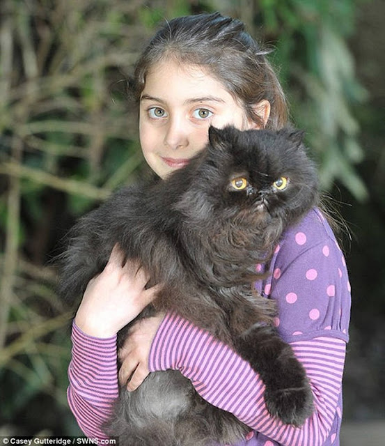 Caffrey gato de dos patas