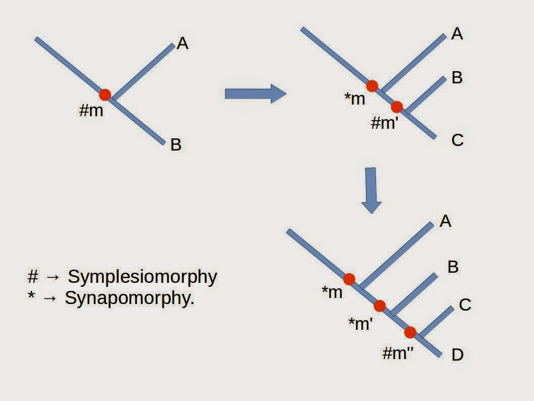 Related keywords suggestions for synapomorphy definition for Versus definition
