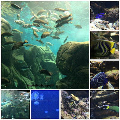 Creta Aquarium Collage