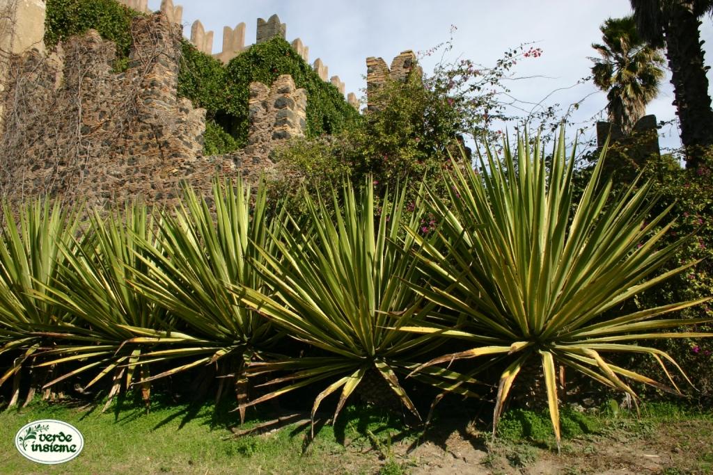 Furcraea selloa una specie per grandi spazi for Piante da giardino grandi