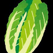 白菜のイラスト(野菜)