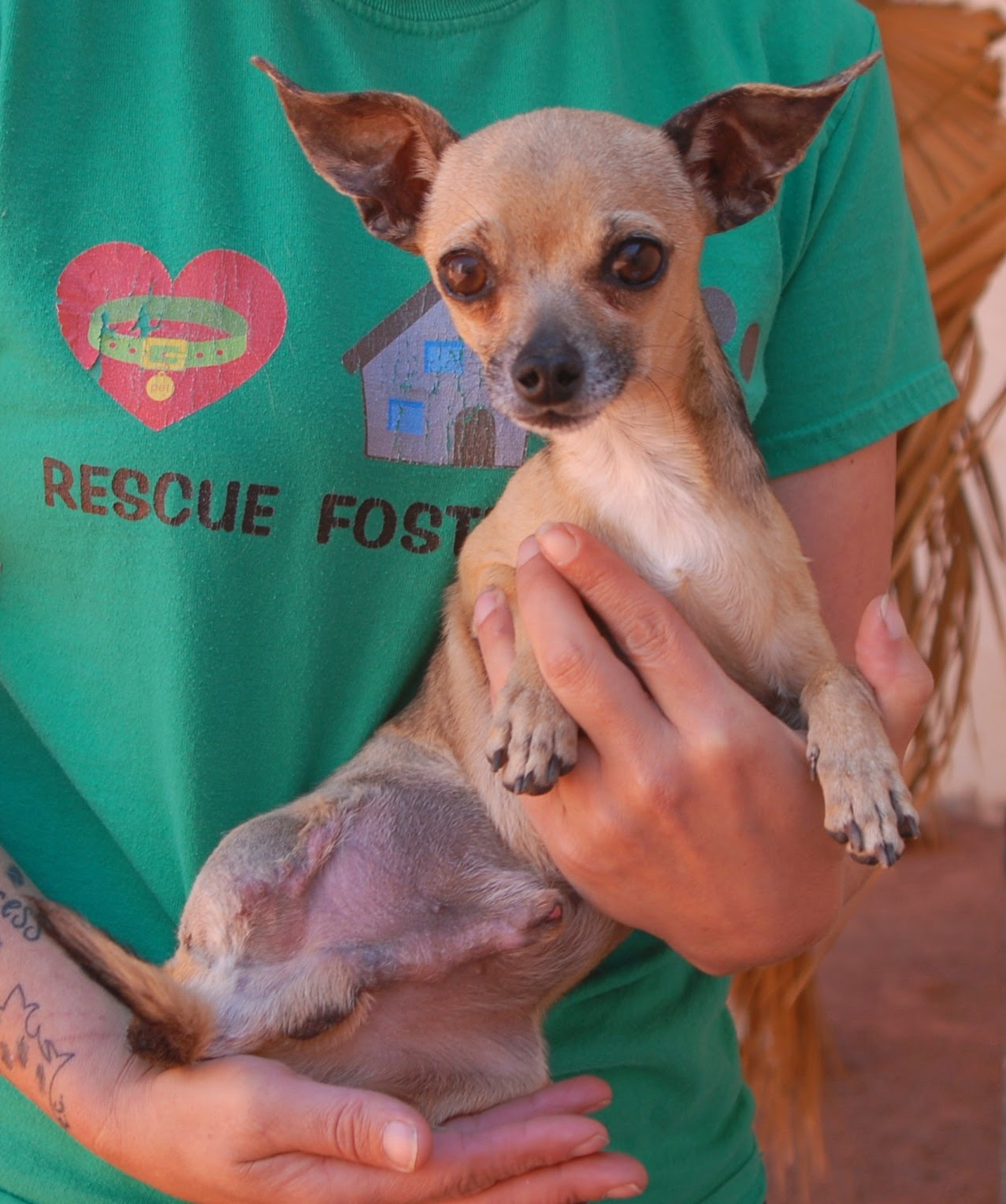 Nevada spca animal rescue wolfgang for Dog pound las vegas nevada