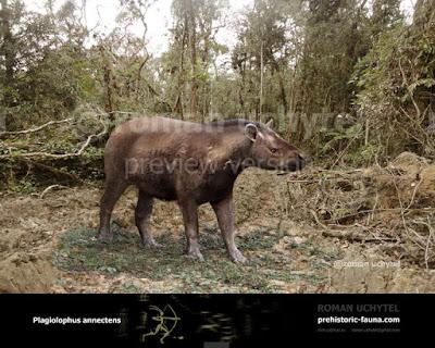 Plagiolophus