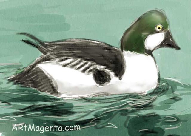 En  fågelmålning av en Knipa  från Artmagentas svenska galleri om fåglar