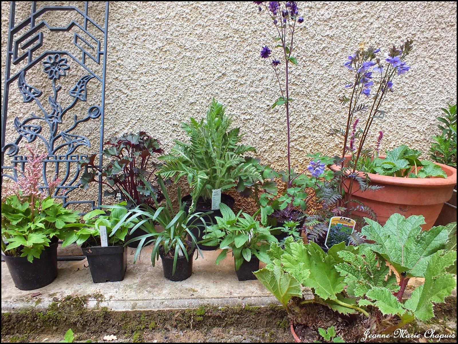 Le jardin du bois joli foires aux plantes for Jardin aux plantes