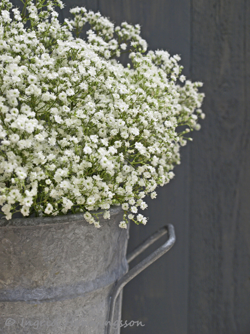 of spring and summer floral favourites     gypsophila, Natural flower