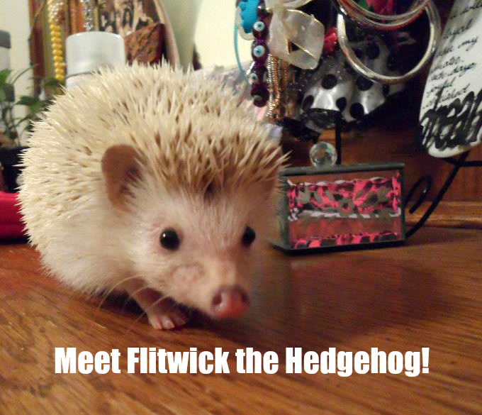 flitwick the hedgehog
