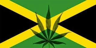 maconha da jamaica